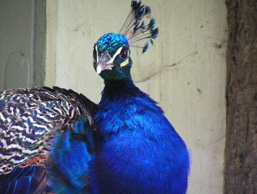birdsofafeather